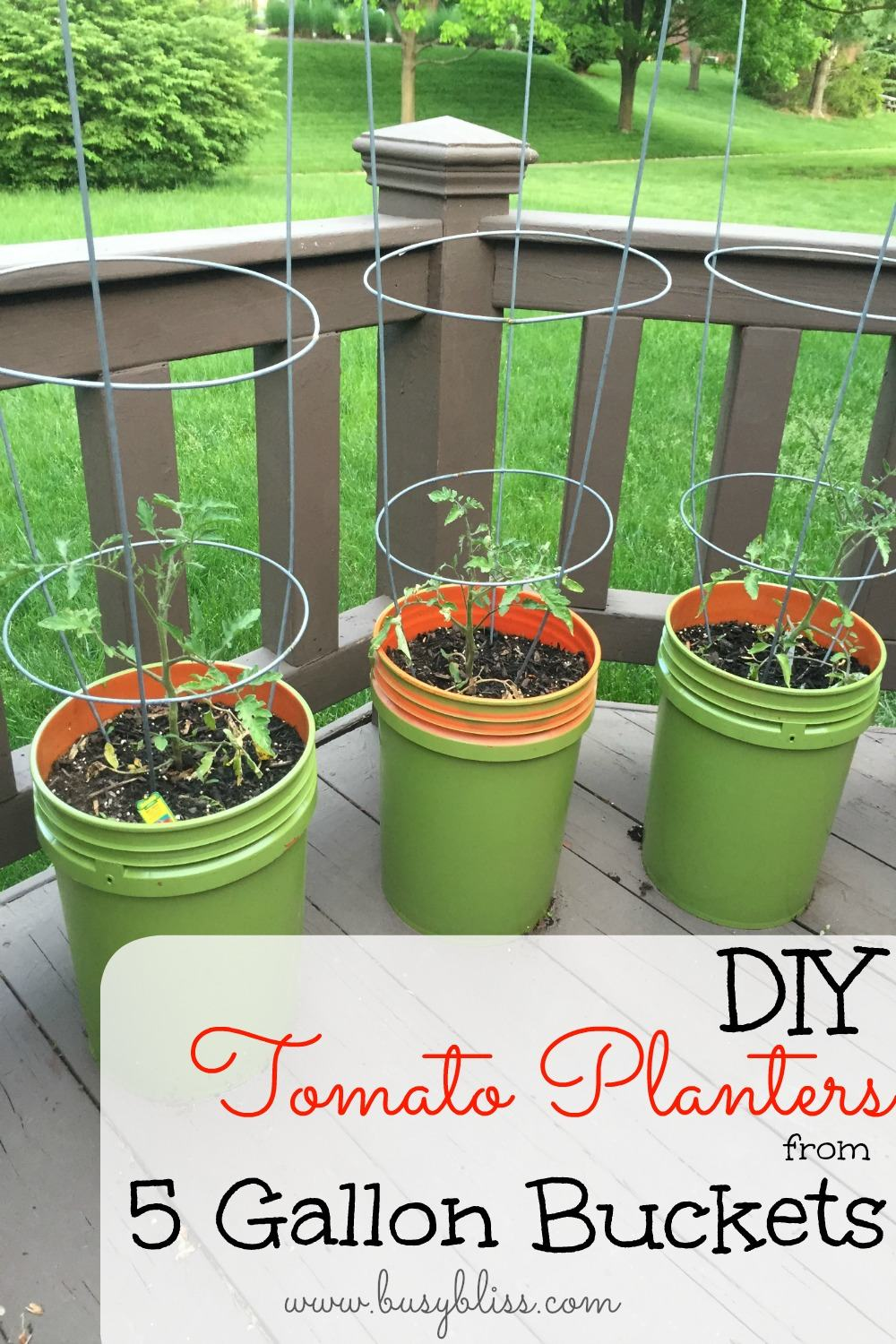 Diy Tomato Planters From 5 Gallon Buckets Busy Bliss